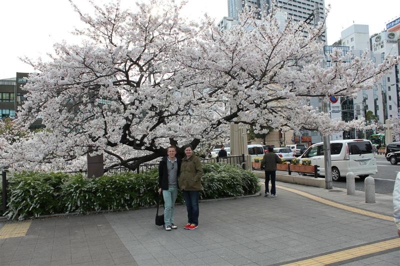 Hanami 2013-10