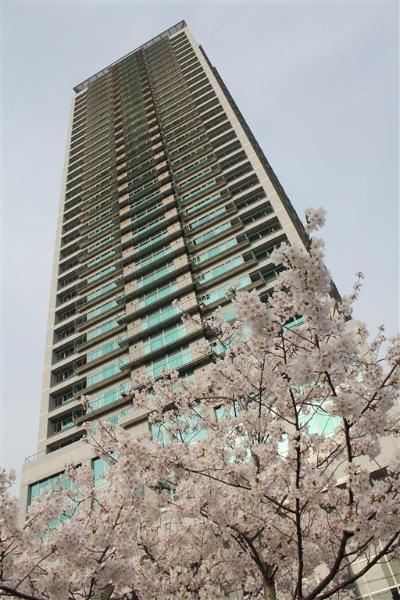 Hanami 2013-06